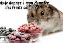 Puis-je-donner-à-mon-Hamster-des-fruits-congelés-00-