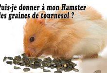 Puis-je-donner-à-mon-Hamster-des-graines-de-tournesol-00