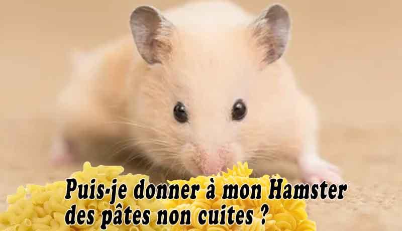 Puis-je-donner-à-mon-Hamster-des-pâtes-non-cuites-00
