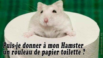 Puis-je-donner-à-mon-Hamster-un-rouleau-de-papier-toilette-00-