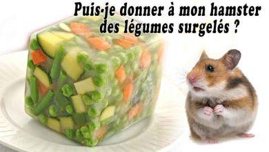 Puis-je-donner-à-mon-hamster-des-légumes-surgelés--00