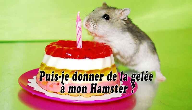 Puis-je-donner-de-la-gelée-à-mon-Hamster00