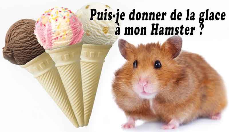 Puis-je-donner-de-la-glace-à-mon-Hamster-00