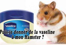 Puis-je-donner-de-la-vaseline-à-mon-Hamster-00