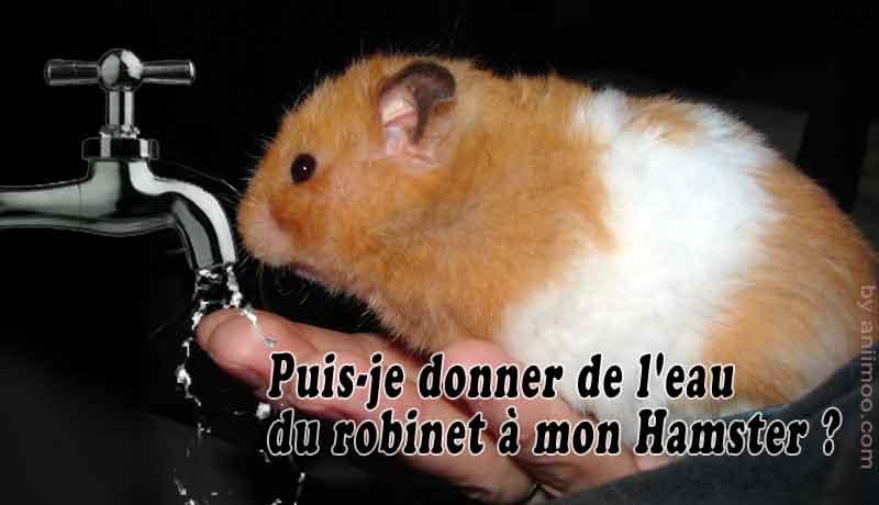Puis-je-donner-de-l'eau-du-robinet-à-mon-Hamster-00