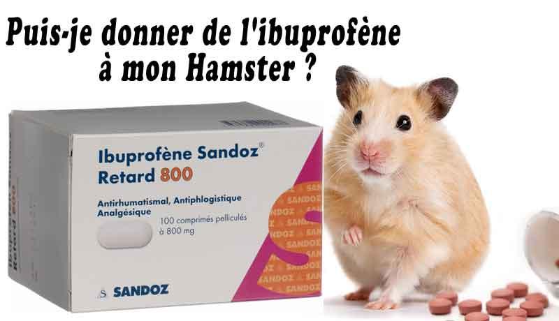 Puis-je-donner-de-l'ibuprofène-à-mon-Hamster-00