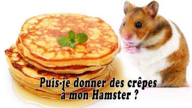 Puis-je-donner-des-crêpes-à-mon-Hamster-FB