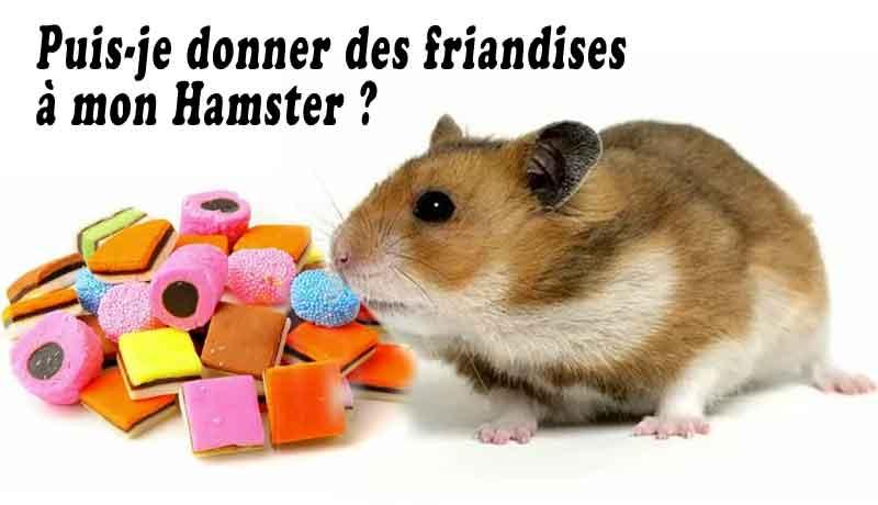 Puis-je-donner-des-friandises-à-mon-Hamster-00-