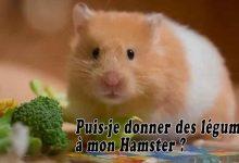 Puis-je-donner-des-légumes-à-mon-Hamster--00-