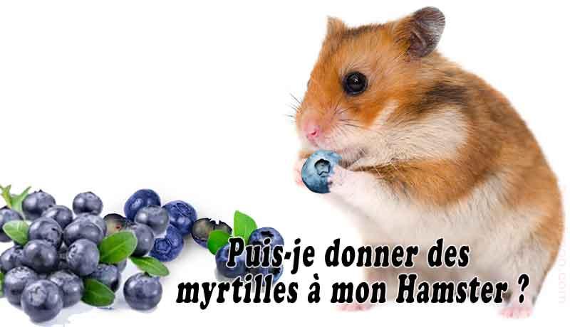 Puis-je-donner-des-myrtilles-à-mon-Hamster-00