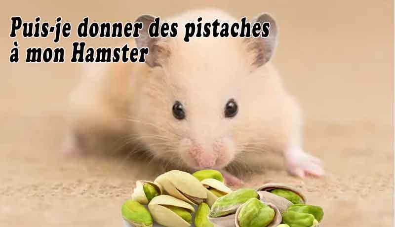 Puis-je-donner-des-pistaches-à-mon-Hamster-00
