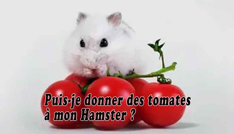 Puis-je-donner-des-tomates-à-mon-Hamster-00