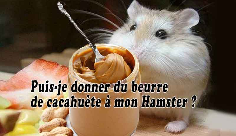Puis-je-donner-du-beurre-de-cacahuète-à-mon-Hamster-00