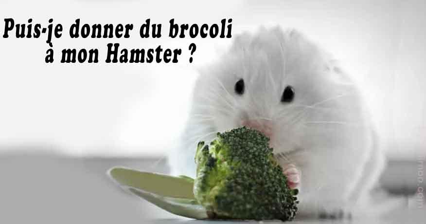 Puis-je-donner-du-brocoli-à-mon-Hamster-00-
