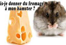 Puis-je-donner-du-fromage-à-mon-hamster-00