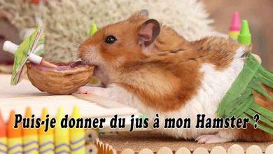 Puis-je-donner-du-jus-à-mon-Hamster-00