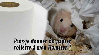 Puis-je-donner-du-papier-toilette-à-mon-Hamster-00