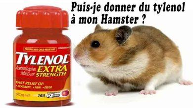 Puis-je-donner-du-tylenol-à-mon-Hamster-00