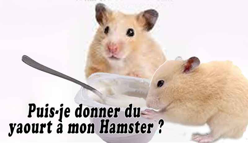 Puis-je-donner-du-yaourt-à-mon-Hamster-00-