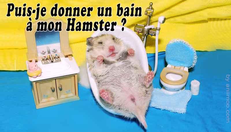 Puis-je-donner-un-bain-à-mon-Hamster-00