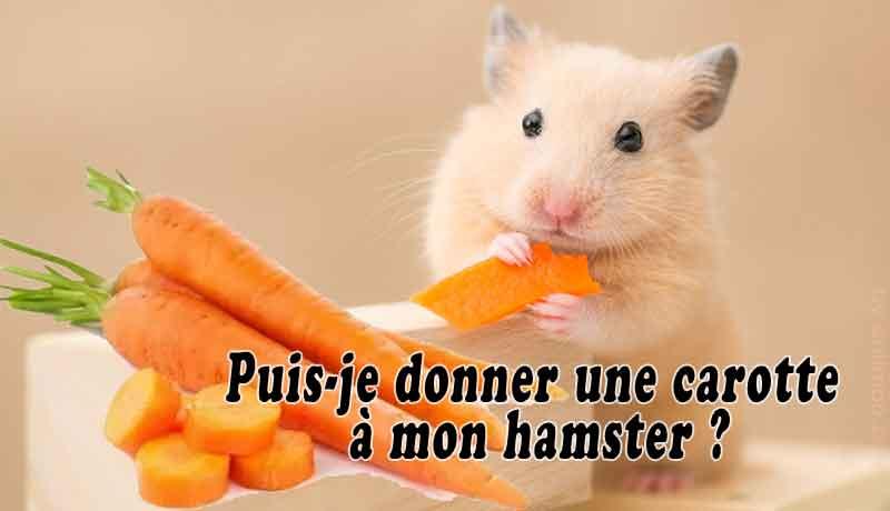 Puis-je-donner-une-carotte-à-mon-hamster-00-