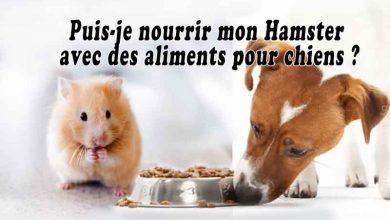 Puis-je-nourrir-mon-Hamster-avec-des-aliments-pour-chiens-00