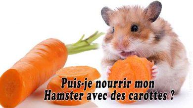 Puis-je-nourrir-mon-Hamster-avec-des-carottes-00