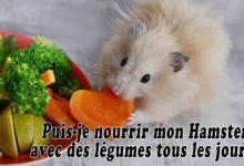 Puis-je-nourrir-mon-Hamster-avec-des-légumes-tous-les-jours-00