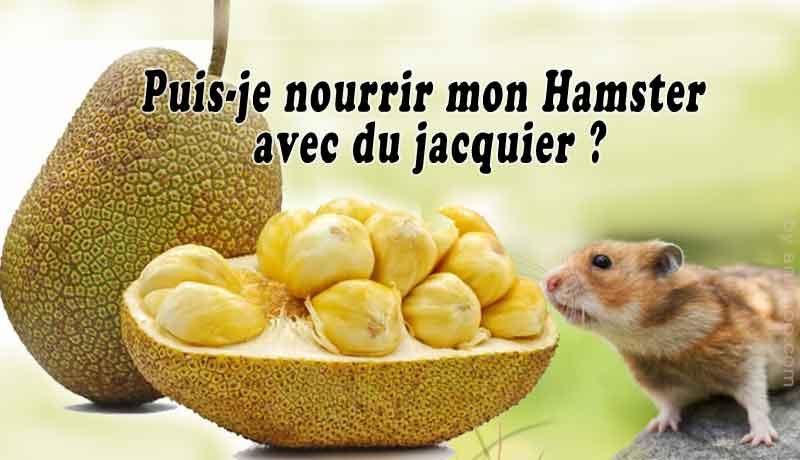 Puis-je-nourrir-mon-Hamster-avec-du-jacquier-00