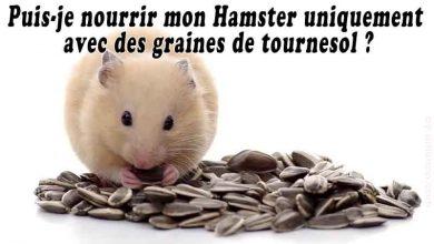 Puis-je-nourrir-mon-Hamster-uniquement-avec-des-graines-de-tournesol-00