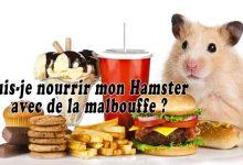 Puis-je-nourrir-mon-hamster-avec-de-la-malbouffe-00