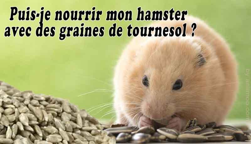 Puis-je-nourrir-mon-hamster-avec-des-graines-de-tournesol-00