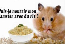 Puis-je-nourrir-mon-hamster-avec-du-riz-00