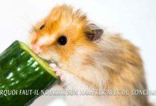 Pourquoi faut-il nourrir son Hamster avec du concombre?